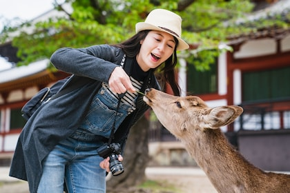 Full-Day Bus Tour to Kyoto, Nara & Kobe