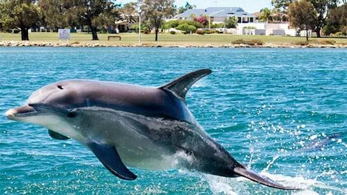 Mandurah Canals & Dolphin Watch Tour in Perth