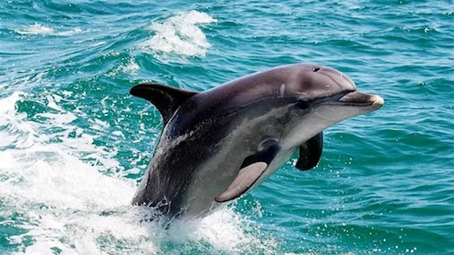 Dolphin Watch Tour in Perth