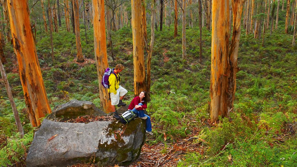 Hikers in a forest in Perth