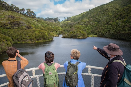 Half day hiking tour at ZEALANDIA - photo by Chris Helliwell.jpg