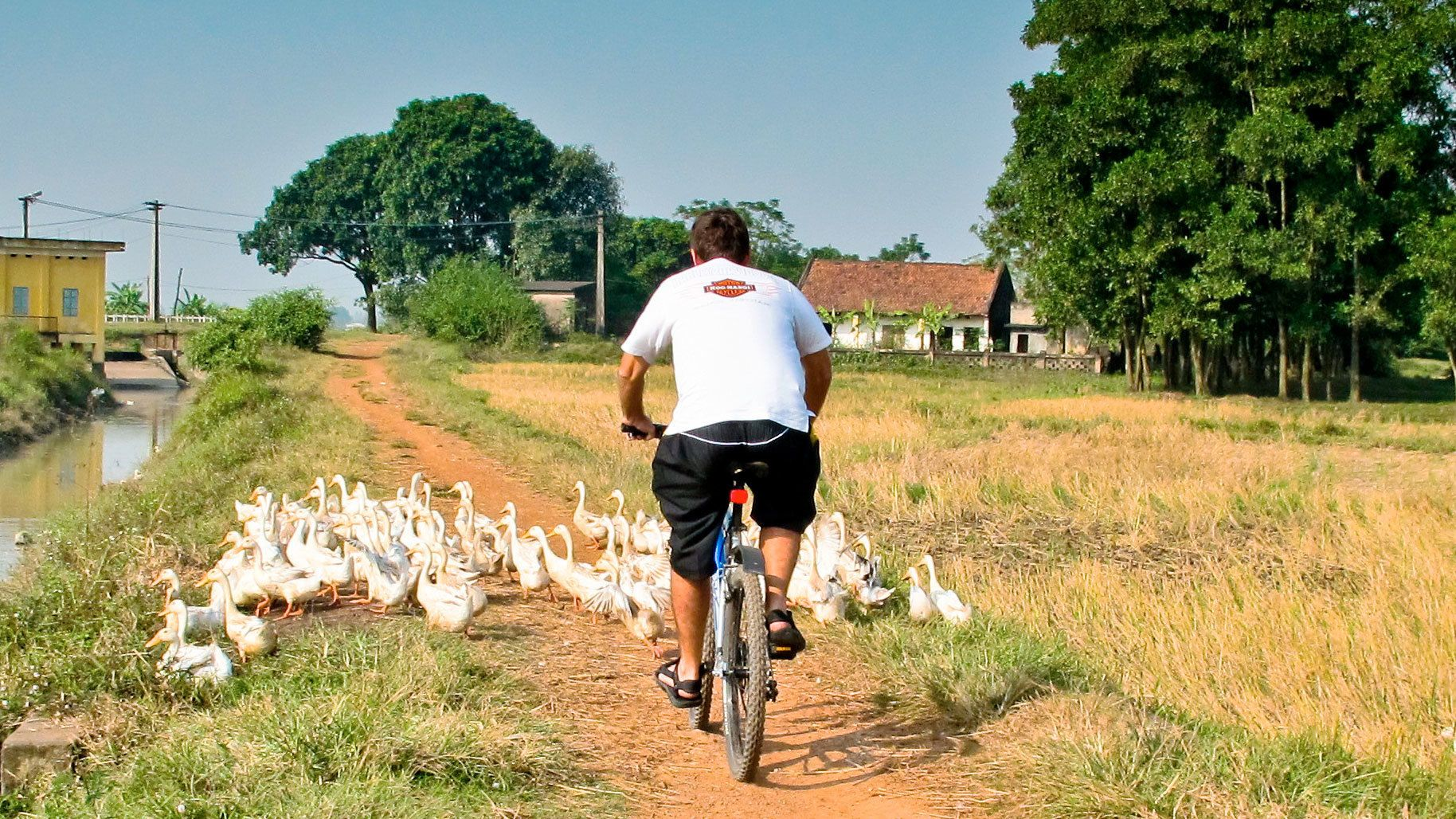 Half Day Discover Real Countryside Surroundings Hoi An By Bike