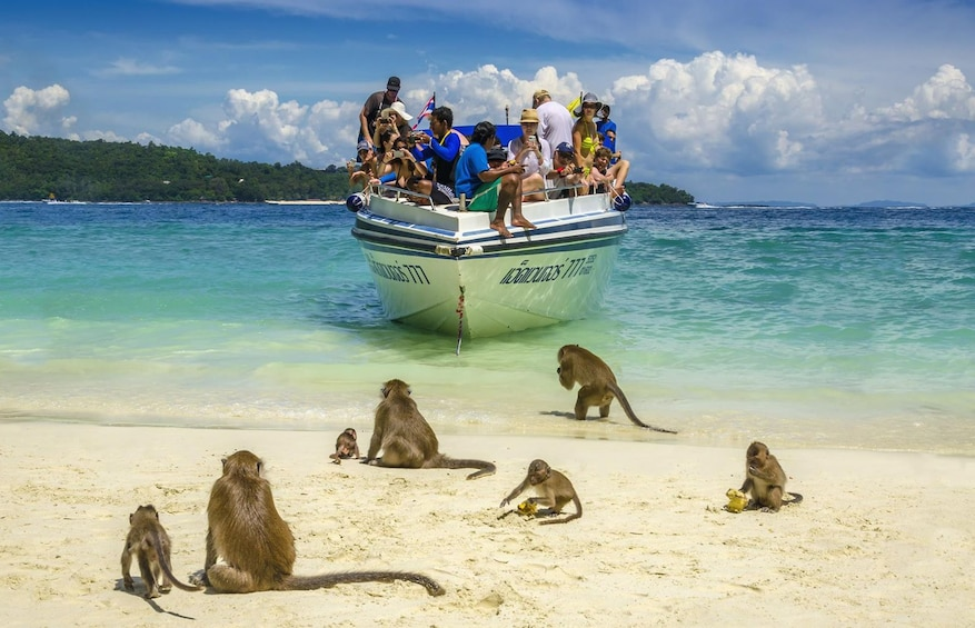 Show item 1 of 10. Early Riser or Morning  Phi Phi Island Snorkeling Tour
