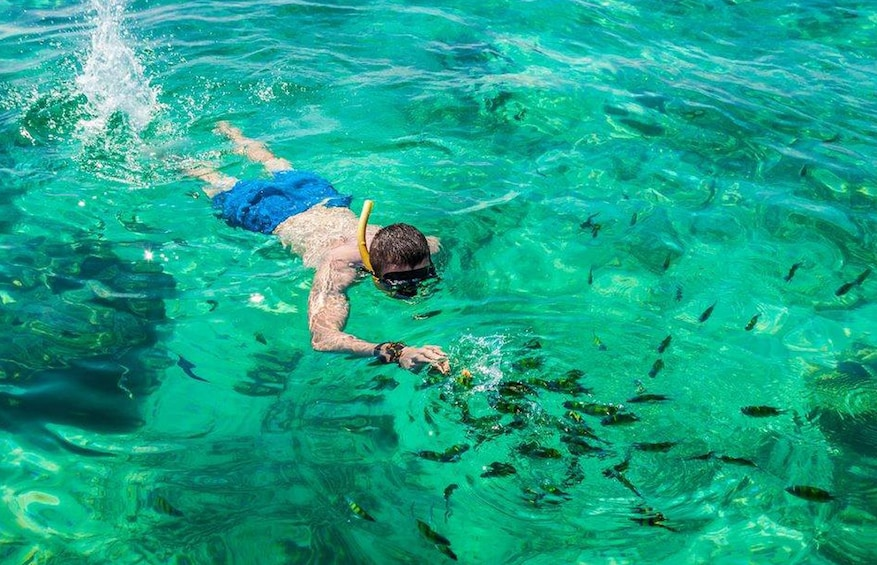 Show item 3 of 10. Early Riser or Morning  Phi Phi Island Snorkeling Tour
