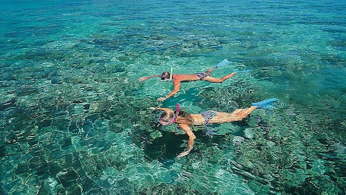 Couple snorkels over reefs around Coral Island