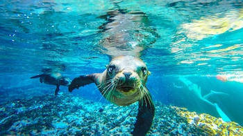 Espiritu Santo Snorkel and Sea Lion adventure