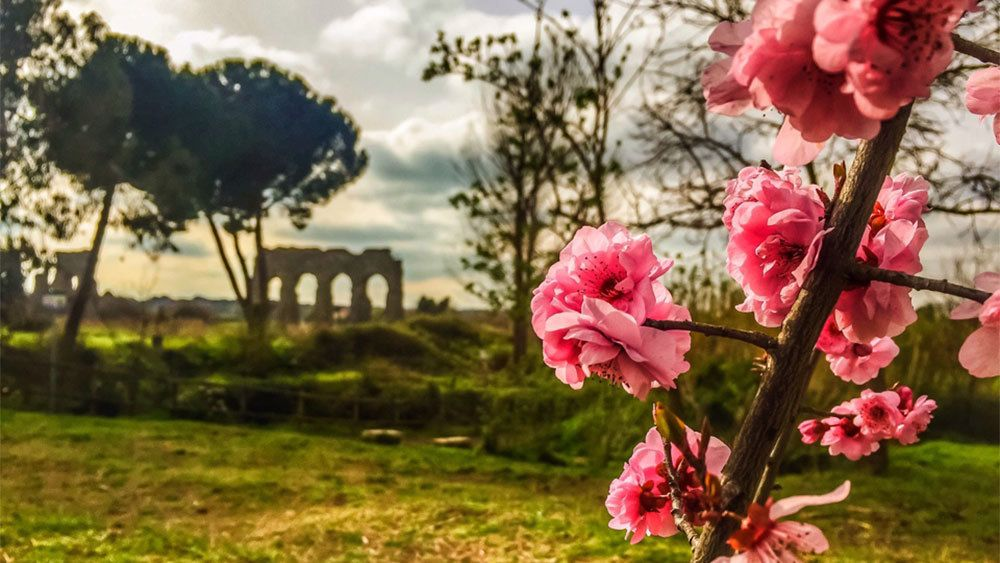 Flowering plant with field and ruins in the background in Rome