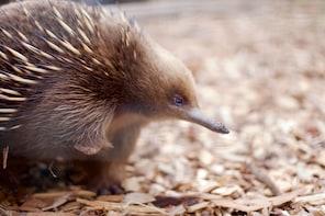 波诺朗野生动物保护区门票