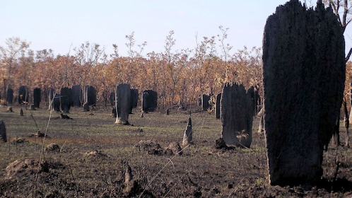 Magnetic termite mounds at Litchfield National Park in Australia