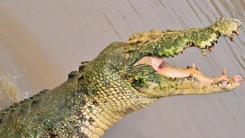 Crocodile at Litchfield National Park in Australia