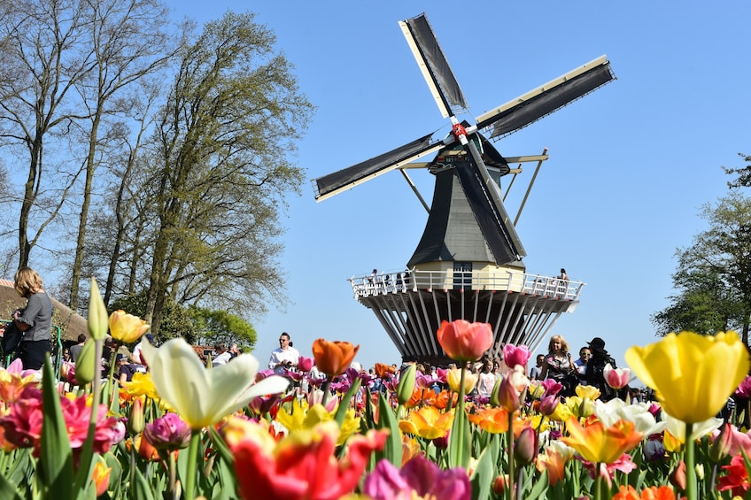 Show item 2 of 10. Skip-the-Line Keukenhof Garden Tickets with Roundtrip Transport