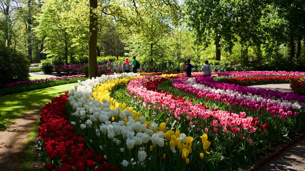 Show item 3 of 10. Rows of Flowers in a garden in Amsterdam
