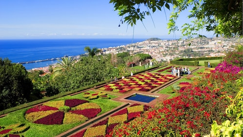 Colorful hedges in Funchal