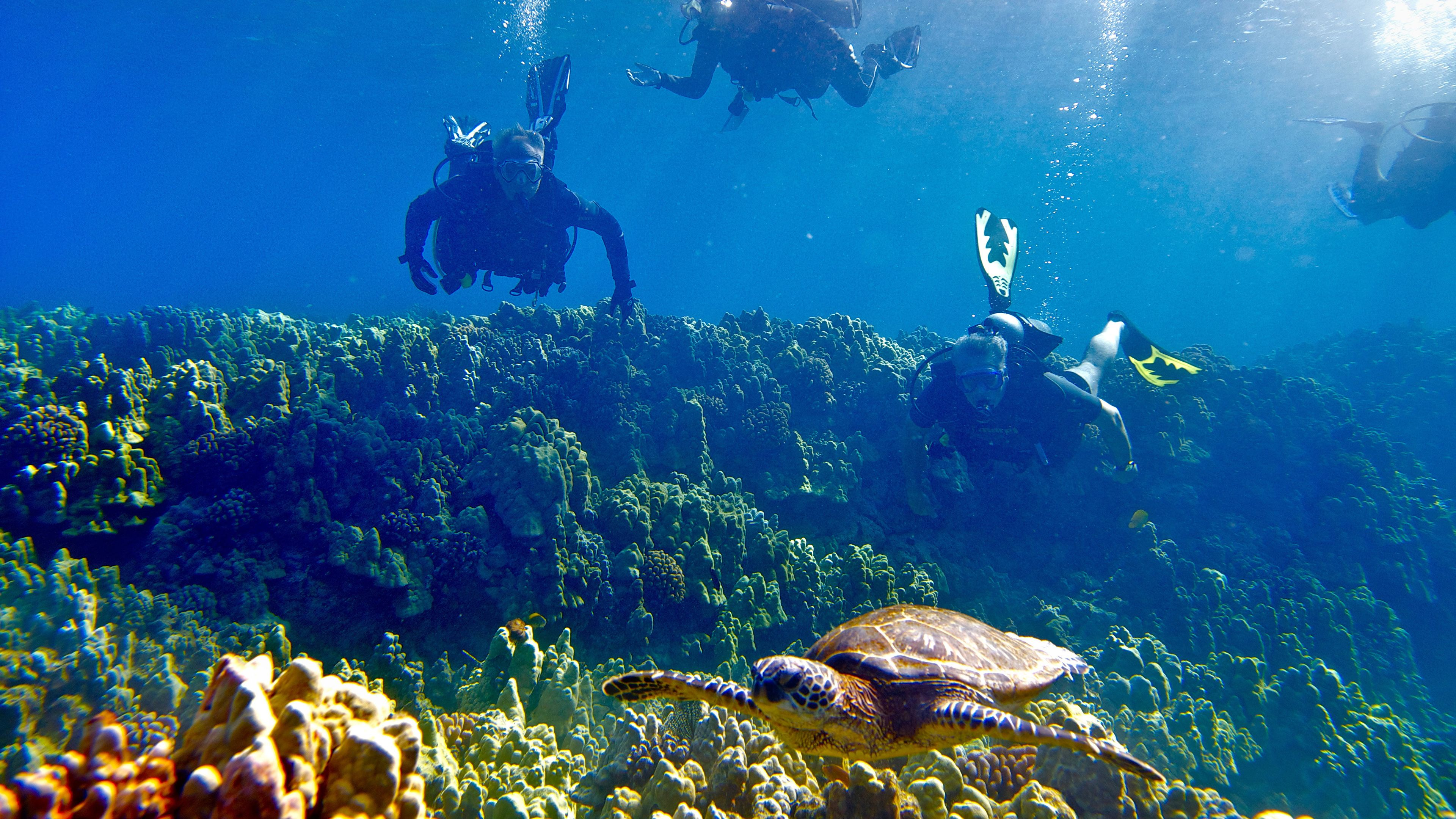 Divers watching a sea turtle on Big Island