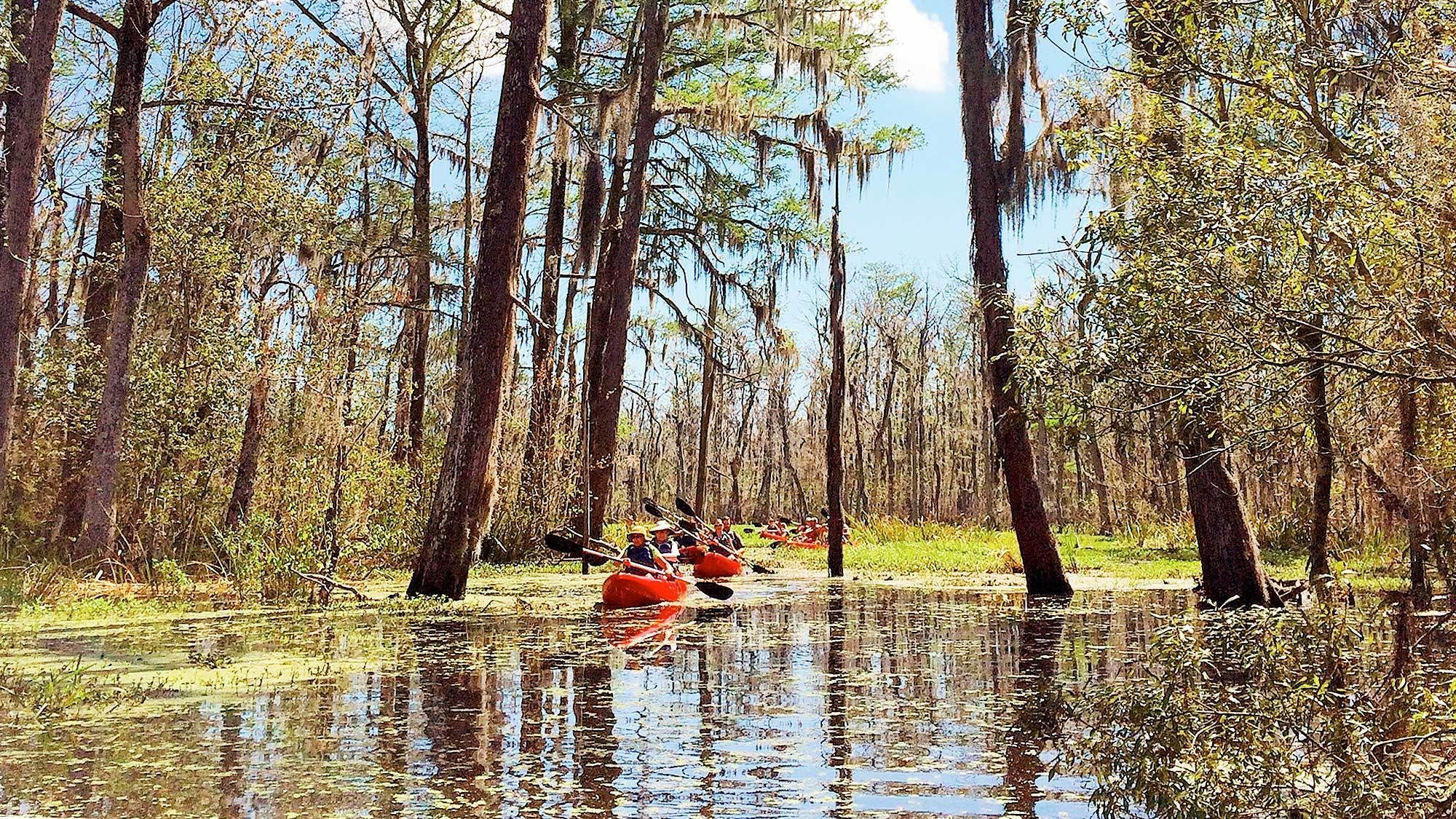 View on the Honey Island Kayak Swamp Tours