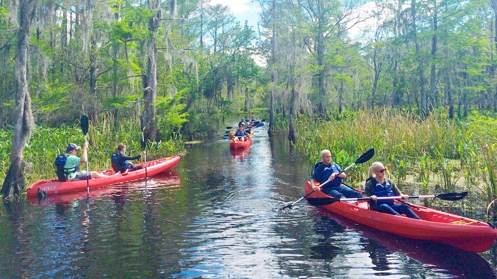 Show item 5 of 5. Group on the Honey Island Kayak Swamp Tours