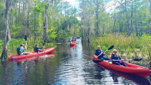 Group on the Honey Island Kayak Swamp Tours