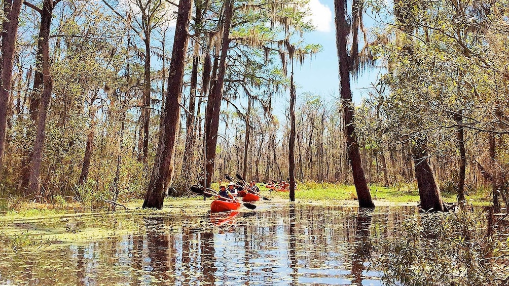 Show item 2 of 5. Scenic kayaking tour in New Orleans