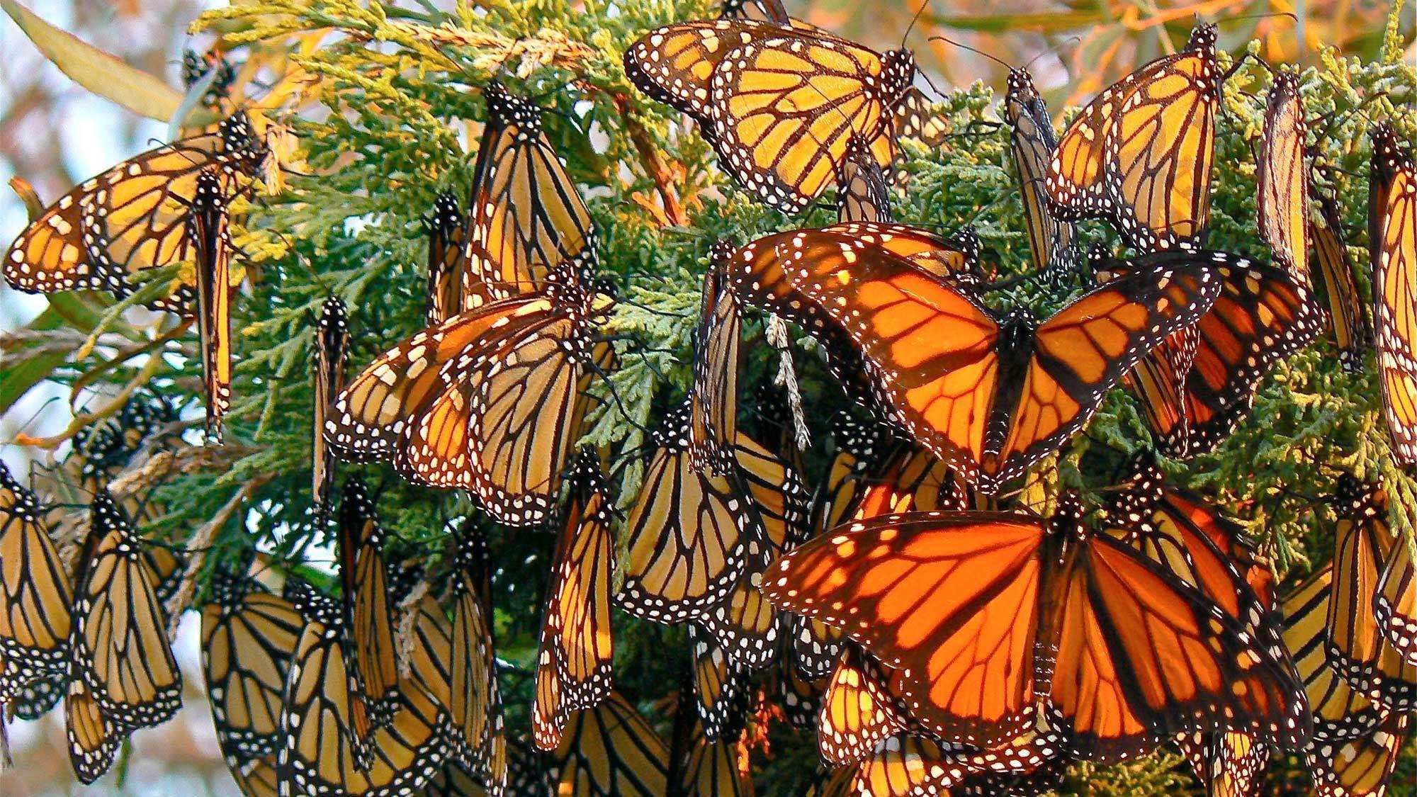 Private Monarch Butterfly Sanctuary Tour