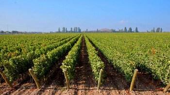 Concha y Toro com passeio na vinícola Undurraga