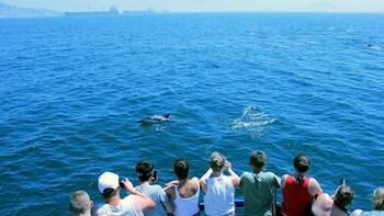 Gibraltar Dolphin Safari - first class
