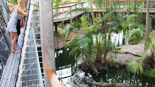 3-Day Daintree Rainforest & Great Barrier Reef Tour