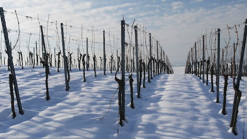Dormant vineyards in Niagara Falls, Ontario
