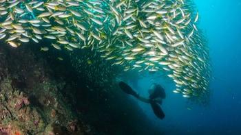 Excursion de plongée sous-marine à au large des îles Phi Phi, au départ de ...