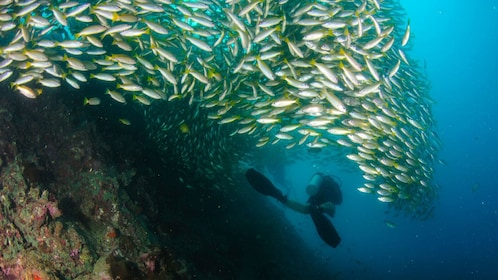 Diver swimming through school of fish in Phi Phi