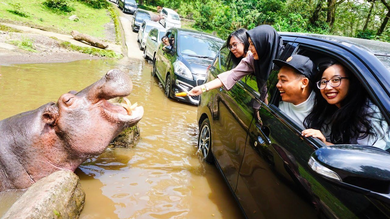 Private Day Trip to Puncak Safari Park Tour with Lunch