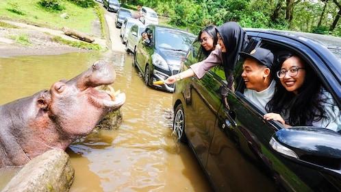 hippo 2.jpg