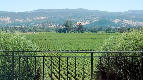 Lush vineyard views on the Sonoma Valley Small Group Tour