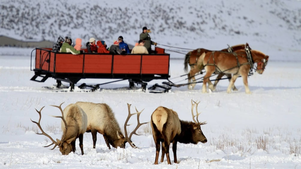 Show item 1 of 10. Group on the Grand Teton And National Elk Refuge Winter Day Trip
