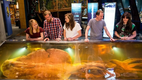 Group looks at giant squid in Te Papa Museum in Wellington