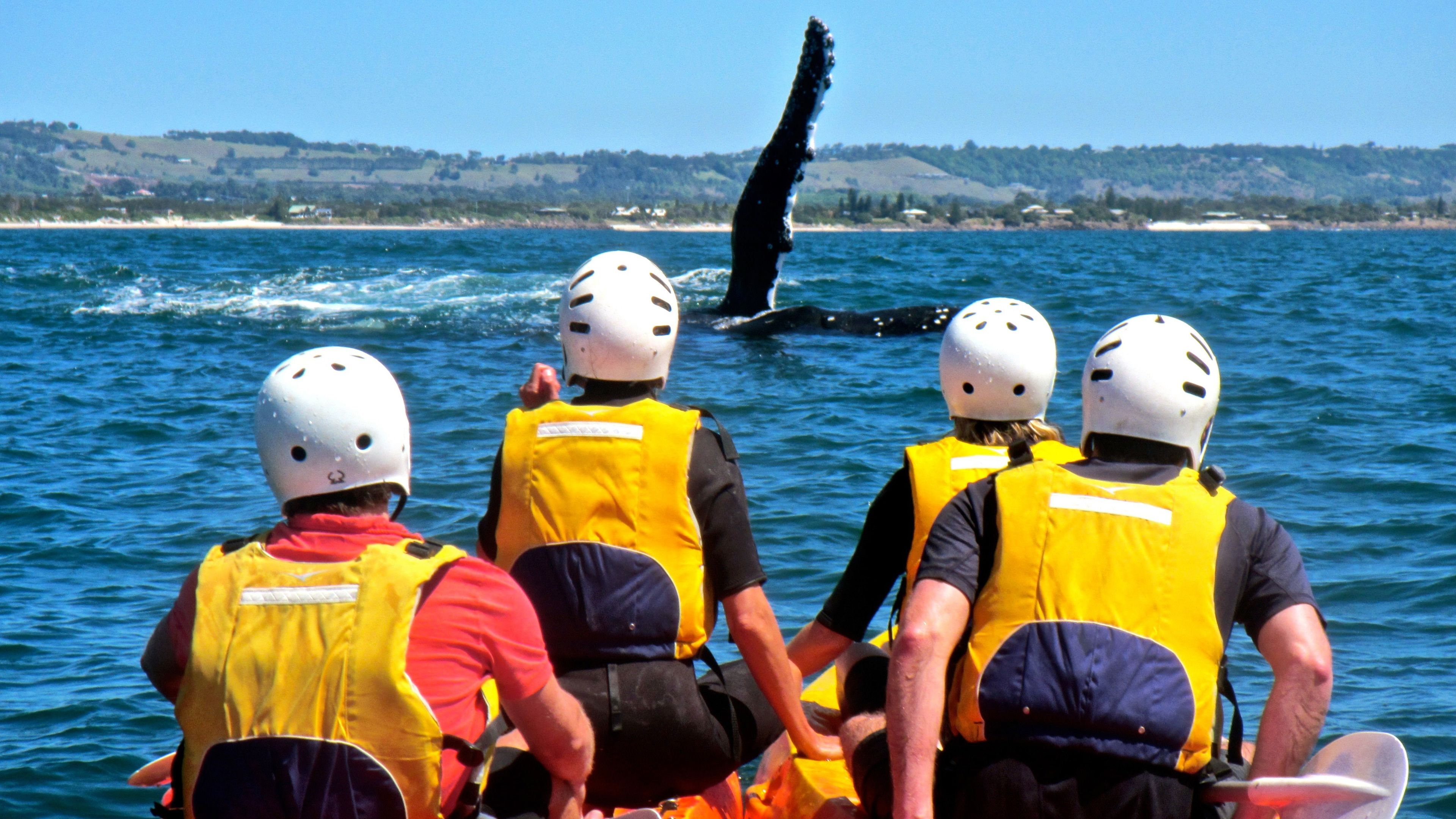 Kayaking group whale watching in Byron Bay