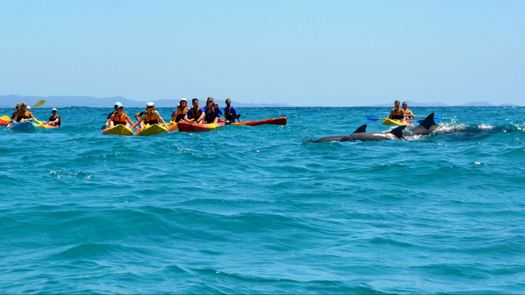 Kayaking group near dolphins in Byron Bay