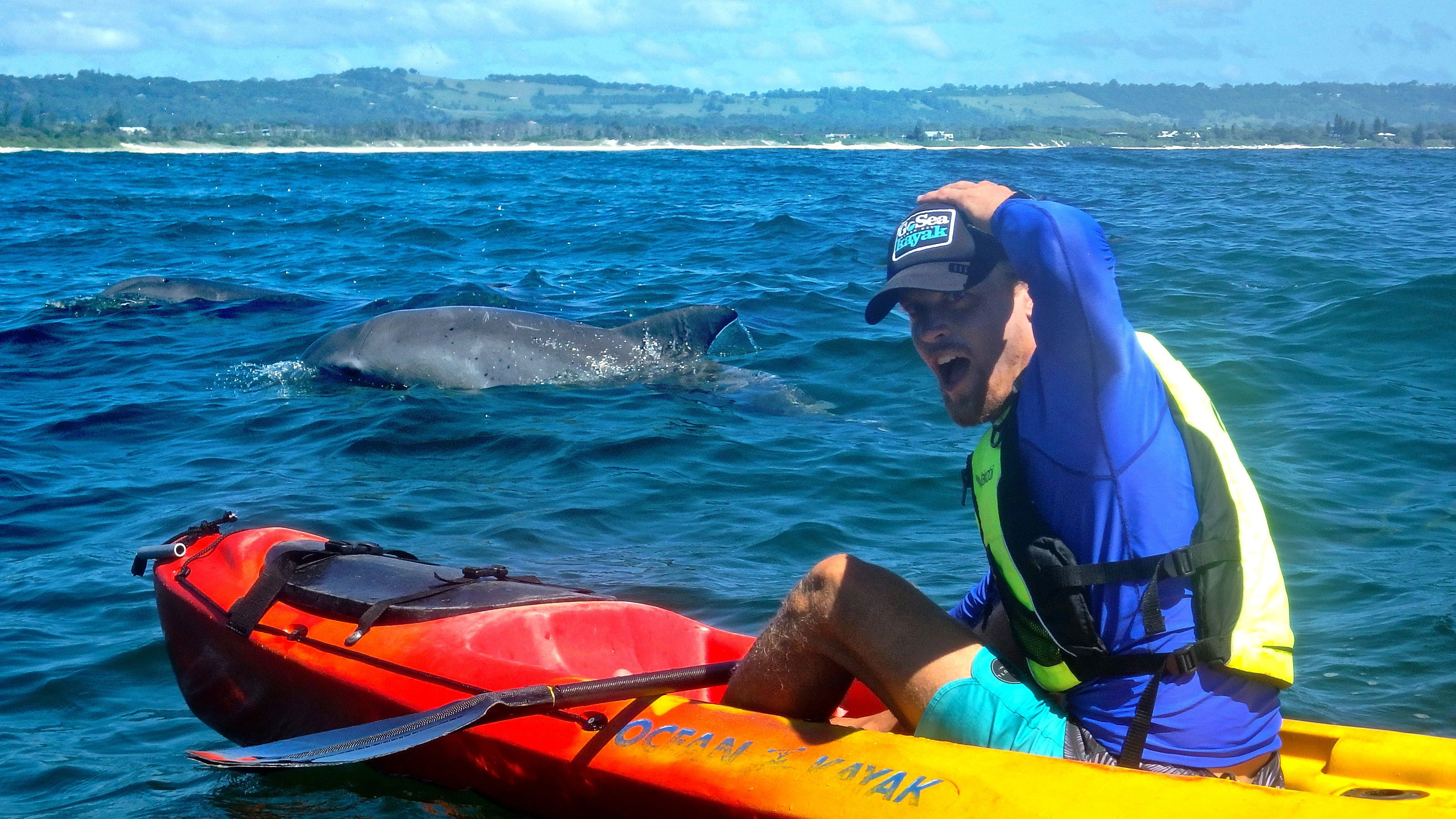 Man on a kayak with dolphins swimming nearby in Byron Bay