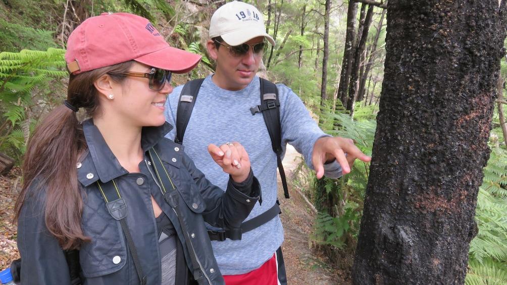 Show item 3 of 5. Hikers looking at tree during Abel Tasman Hiking Tour