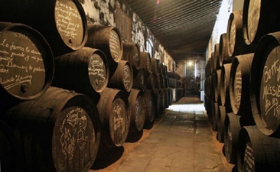 Wine Lover's Experience in Andalusia