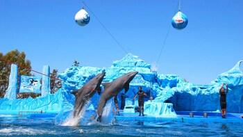 Eintrittskarte für das Aquarium Mundo Marino