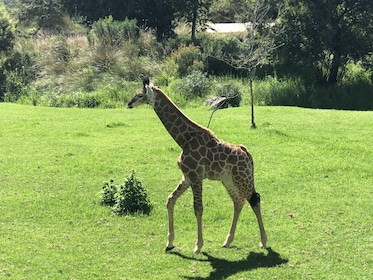 Full-Day Cradle of Humankind Tour