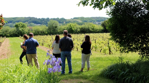 Tour group in a vineyard in Loire Valley