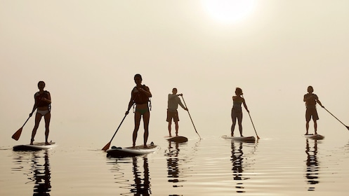 Stand up paddling group in Portland