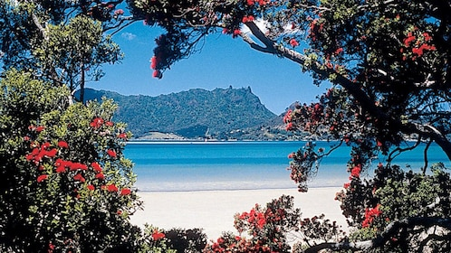 Beach through foliage in Auckland, New Zealand
