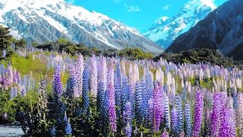Excursion d'une journée complète de Christchurch à Queenstown avec lac Teka...