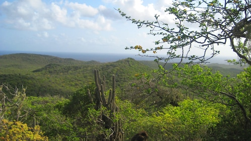 Forests of Curacao
