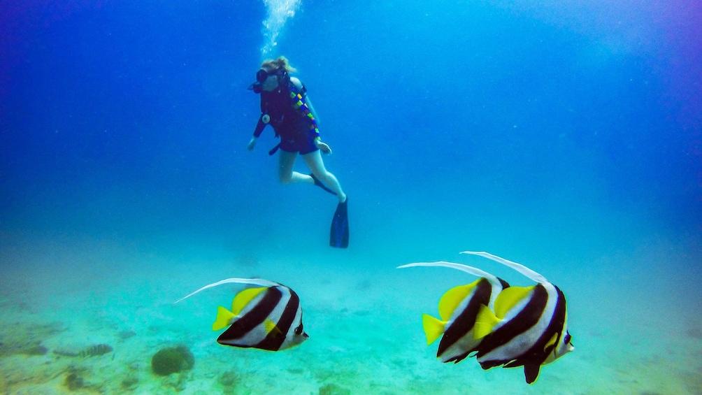 Foto 5 von 5 laden Scuba diver swimming in Koh Tao