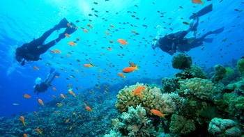 Tur Snorkeling Sehari Penuh di Kepulauan Gili