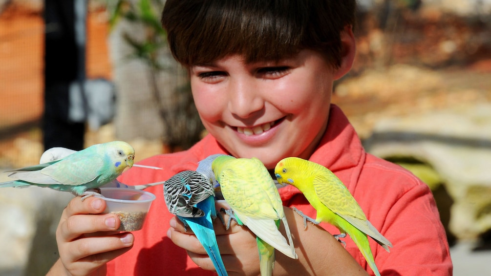Carregar foto 3 de 10. Boy feeding parrots at Zoo Miami