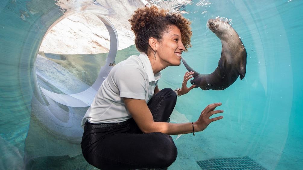 Foto 5 van 10. Woman watching otter in underwater walkway at Zoo Miami